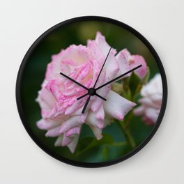 Blooming Pink Roses in the Evening Garden Wall Clock