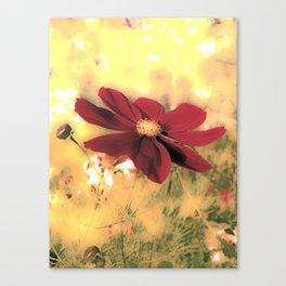 Evening's Last Light Canvas Print