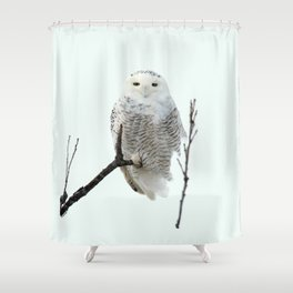 Snowy in the Wind (Snowy Owl 2) Shower Curtain
