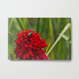 Red Flower And Beetle Metal Print