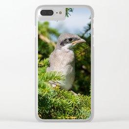 Fledgling Loggerhead Shrike Clear iPhone Case