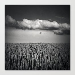 cloud over wheat field Canvas Print