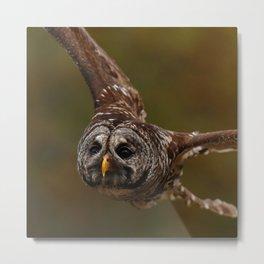 Owl~ Metal Print