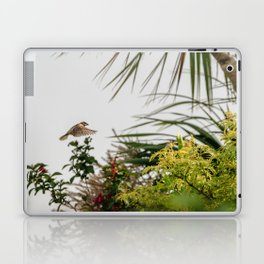 Flying Sparrow Bird female caught in motion flying Laptop & iPad Skin
