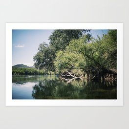 Tree submerged in the lake Art Print