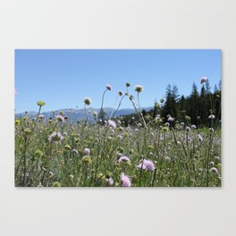 Into the Great Wideopen Canvas Print