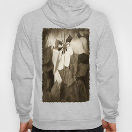 Mixed Color Poinsettias 2 Antiqued Hoody