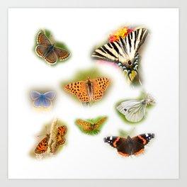Colorful butterflies of europe Art Print