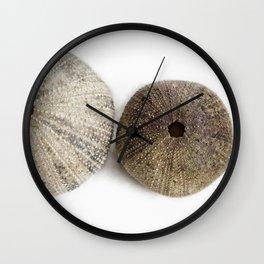 Sea Urchin Shells Wall Clock