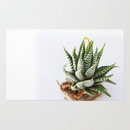 Haworthia Rug