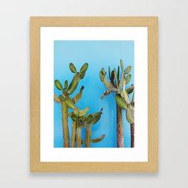 Cactus in Chicama, Peru Framed Art Print