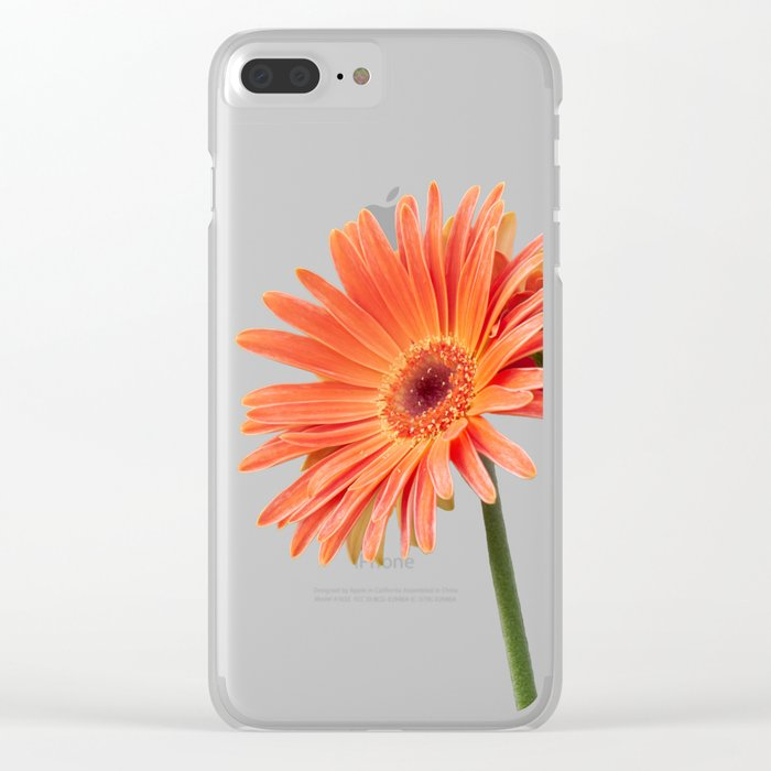 isolated gerbera daisy in the vase Clear iPhone Case