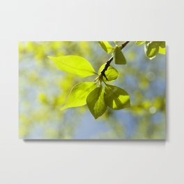 linden leaves, spring Metal Print