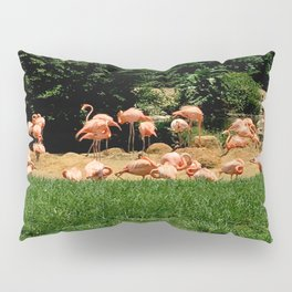 Flock of Flamingos Pillow Sham