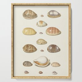 Vintage Seashell Chart I Serving Tray