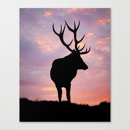 Stag And Sunset Canvas Print