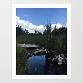 Driftwood beach, Adirondacks Art Print