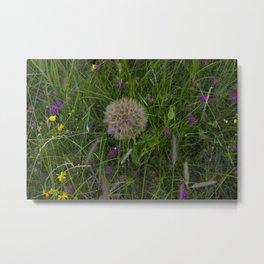 Field of flowers and Dandelions Metal Print