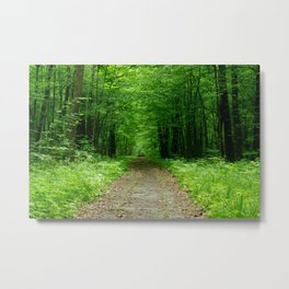 Forest path on spring in Europe, green tunnel of trees, still place on nature without people Metal Print