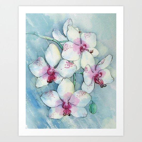 Orchids 01 Art Print