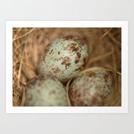 Sparrow eggs macro Art Print