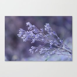 dew drops on wildflower Canvas Print