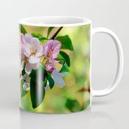 Cluster of pink crabapple flowers. Blooming beauty Coffee Mug