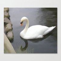 swan Canvas Prints featuring Swan by IvanaW