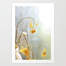 dried flowers Art Print