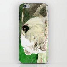 Rufus the Bulldog iPhone & iPod Skin