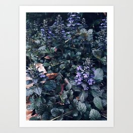 Proud Little Purple Flowers Art Print