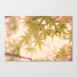 Green leaves of Japanese maple - vintage styleⅡ Canvas Print