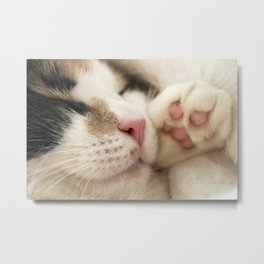 Sleeping Kitty Metal Print