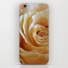 Honey Peach Rose iPhone & iPod Skin
