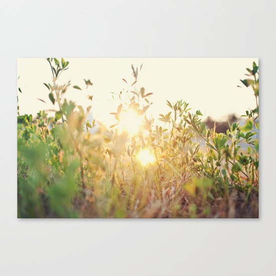 Sun Rising Canvas Print