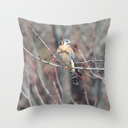 Angry Sparrowhawk (Kestrel) 4 Throw Pillow