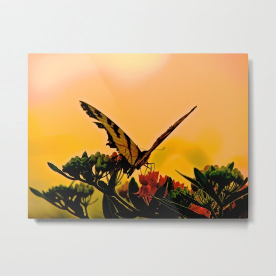 Butterfly Sunset Metal Print