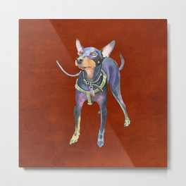 Miniature Pinscher Metal Print