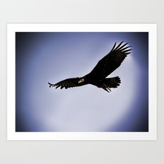 Black Vulture 1 Art Print