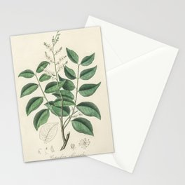 Diesel tree (Copaifera officinalis) illustration from Medical Botany (1836) by John Stephenson and J Stationery Cards