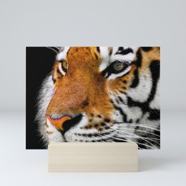 Animal Tiger Big Cat Mini Art Print