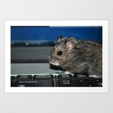 hamster on a keyboard Art Print