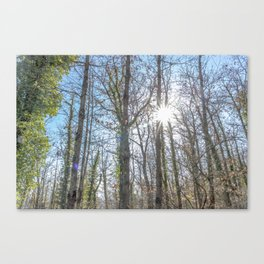 Sunrays on the forest Canvas Print