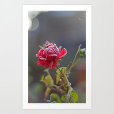 Rose in the frost Art Print