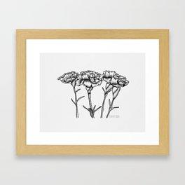 Carnations Framed Art Print