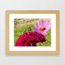 Praying Mantis Dining on a Moth Framed Art Print