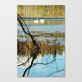 Swan couple on icy lake Canvas Print