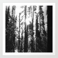can't see the forest through the trees Art Print