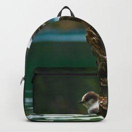 Grey Jay at Joffre Lakes Backpack