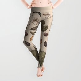 Florida Nature Walks Leggings